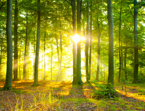 Refurbished Printers Are Your Organization's Key to Sustainability